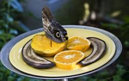 Mango Orange Plaintains Oh My