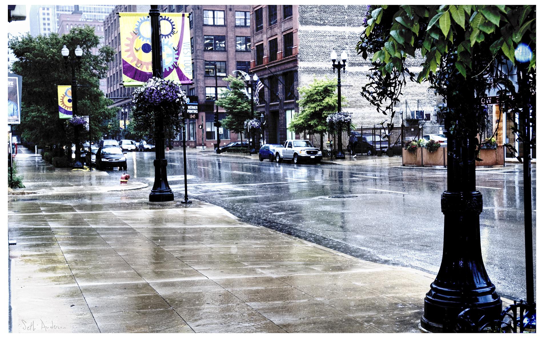 Rain Comes for the Archbishop's Cat-2013