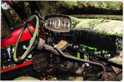 Frostpocket Mold and Fungi
